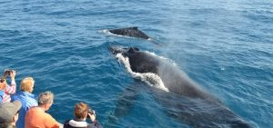 How Can You Prepare to Go Whale Watching?